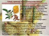 Спеції, прянощі та їхні цілющі властивості: Куркума (халді) – корінь рослини ...