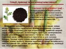 Спеції, прянощі та їхні цілющі властивості: Насіння гірчиці чорної (раі) – на...