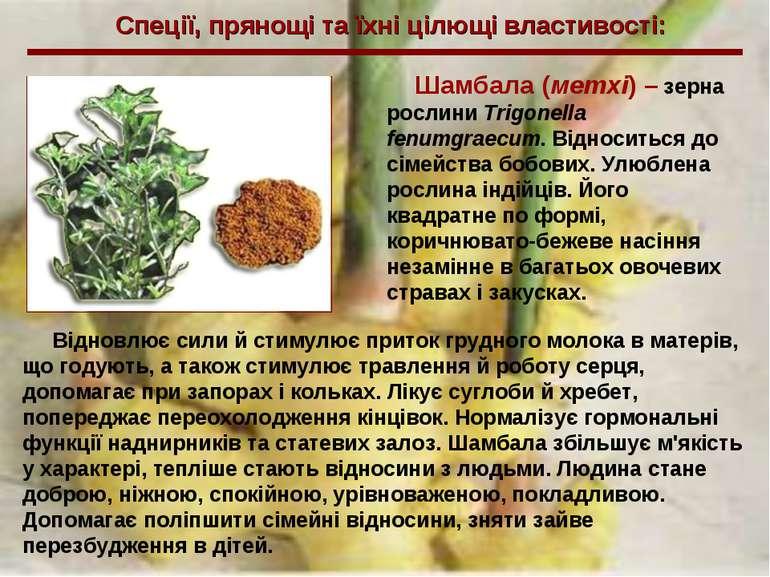 Спеції, прянощі та їхні цілющі властивості: Шамбала (метхі) – зерна рослини T...