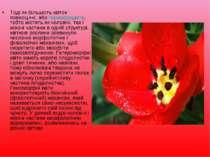 Тоді як більшість квіток повноцінні, або гермафродити, тобто містять як чолов...
