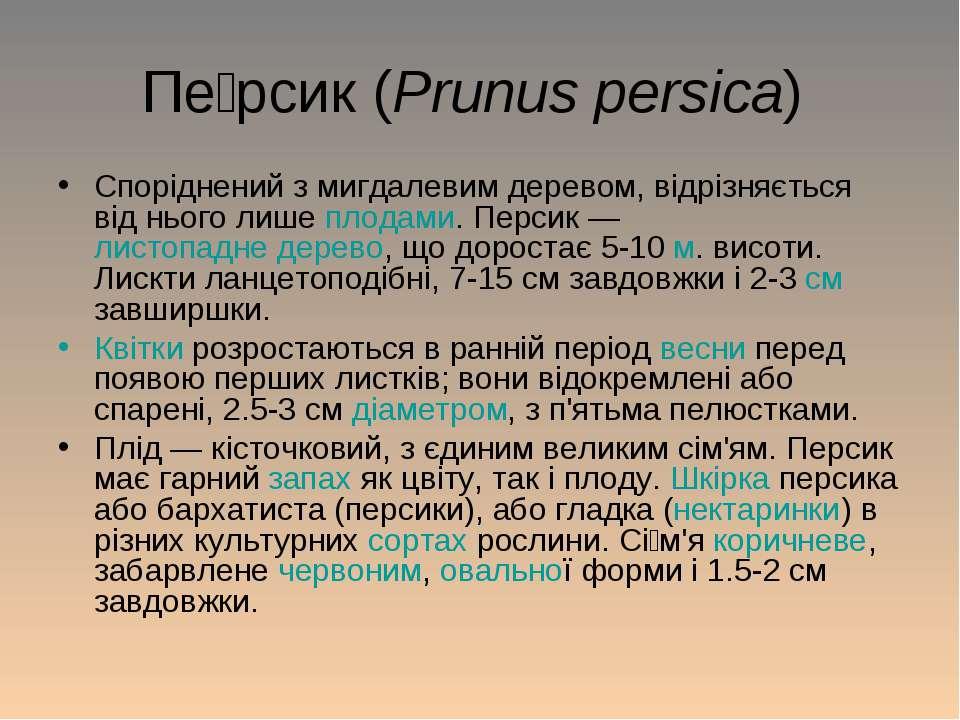 Пе рсик (Prunus persica) Споріднений з мигдалевим деревом, відрізняється від ...