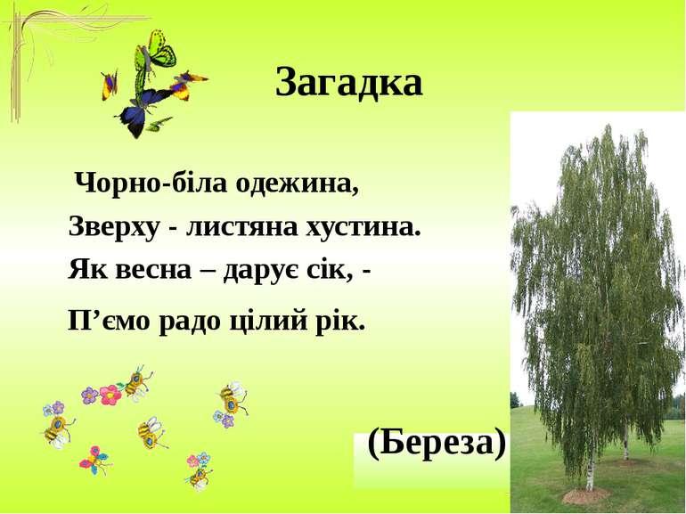Загадка Чорно-біла одежина, Зверху - листяна хустина. Як весна – дарує сік, -...