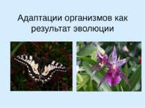 Адаптации организмов как результат эволюции