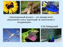 «Эволюционный процесс – это прежде всего образование новых адаптаций, их нако...