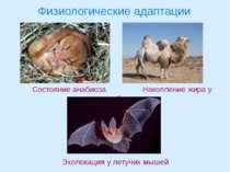 Физиологические адаптации Состояние анабиоза Накопление жира у верблюда Эхоло...