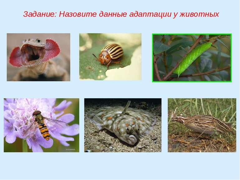 Задание: Назовите данные адаптации у животных