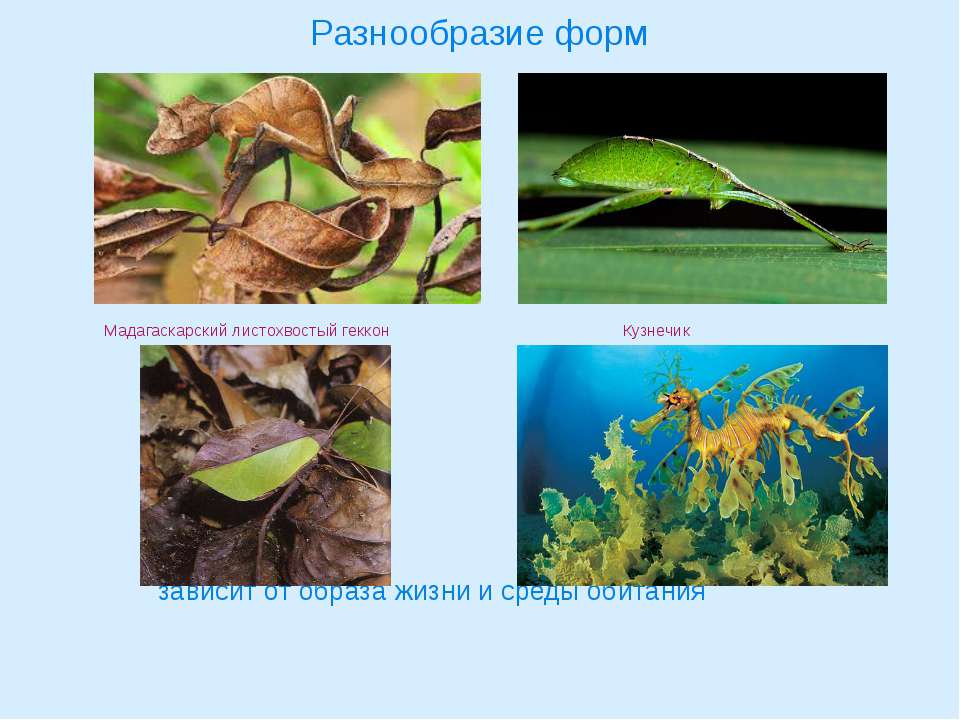 Разнообразие форм Мадагаскарский листохвостый геккон Кузнечик Кустарниковый с...