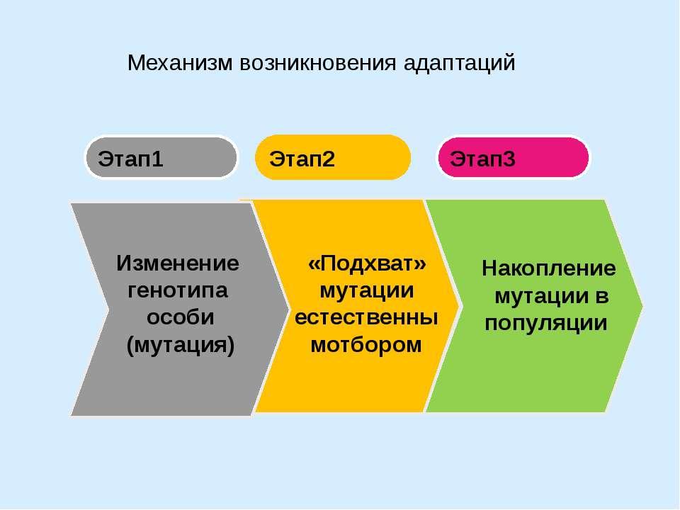 Механизм возникновения адаптаций Этап1 Этап3 Этап2 «Подхват» мутации естестве...
