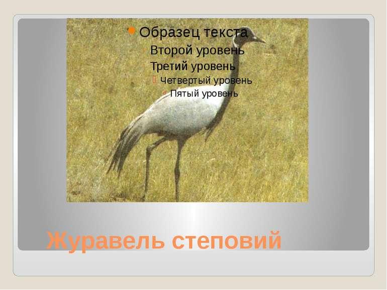 Журавель степовий