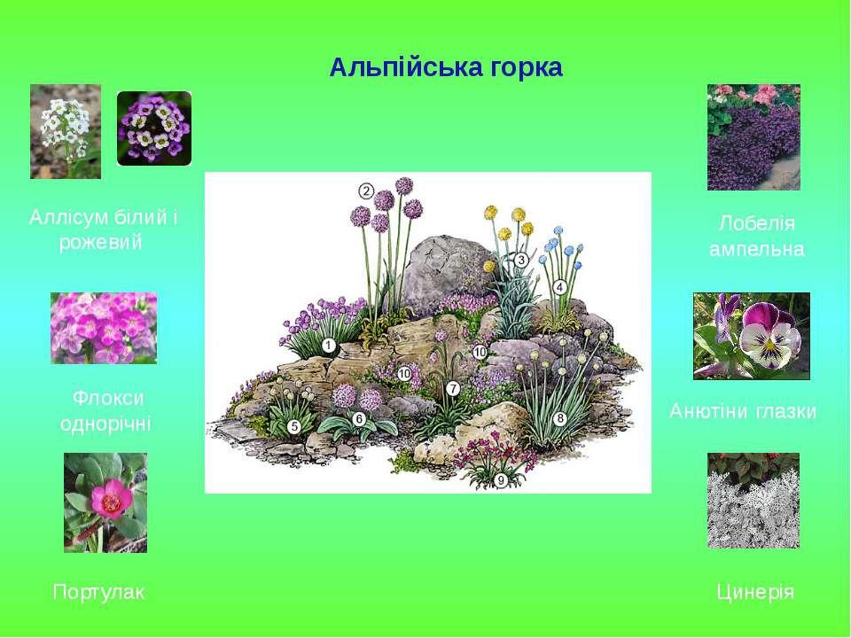 Альпійська горка Аллісум білий і рожевий Флокси однорічні Портулак Лобелія ам...