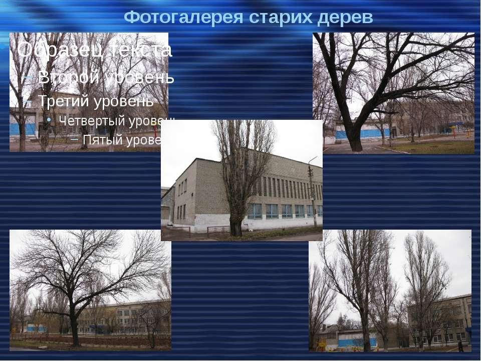 Фотогалерея старих дерев