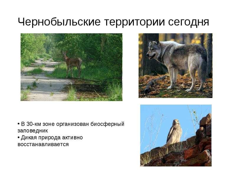 Чернобыльские территории сегодня В 30-км зоне организован биосферный заповедн...