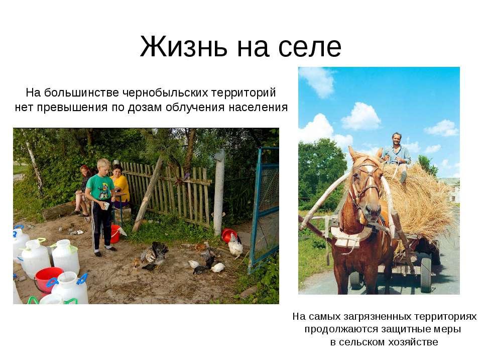 Жизнь на селе На большинстве чернобыльских территорий нет превышения по дозам...