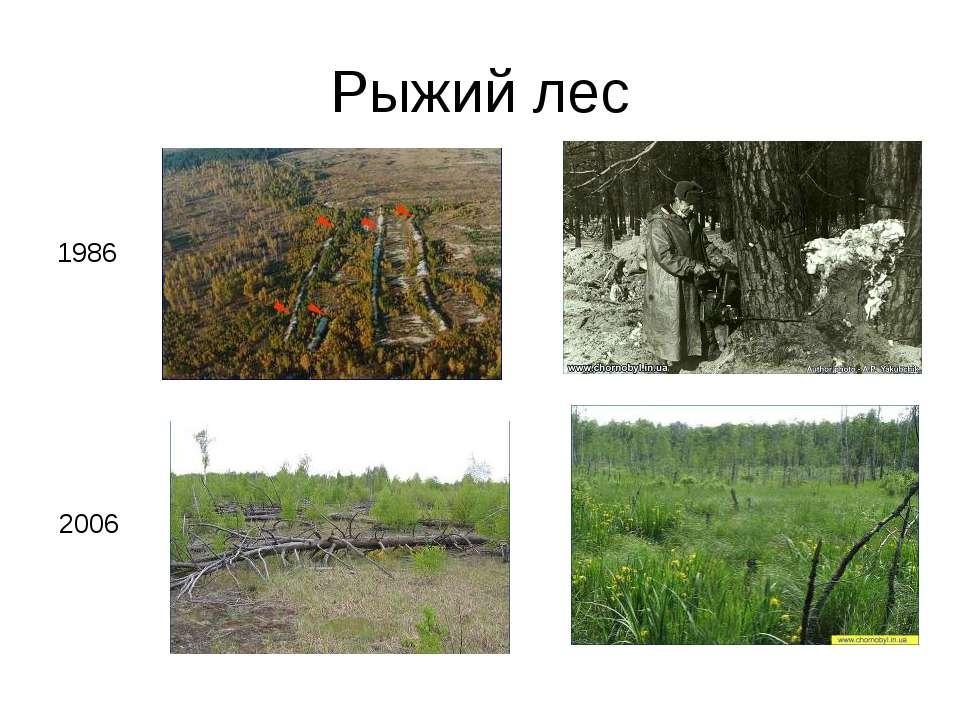 Рыжий лес 1986 2006