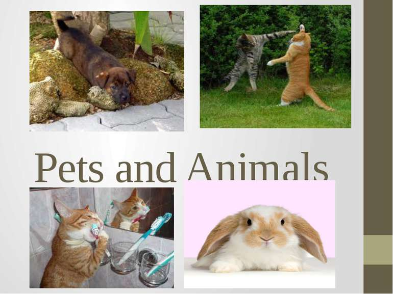 Pets and Animals