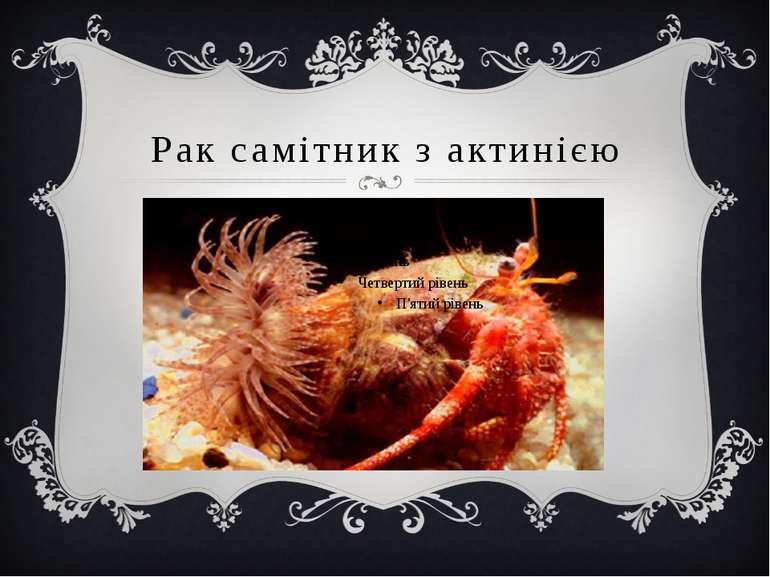 Рак самітник з актинією