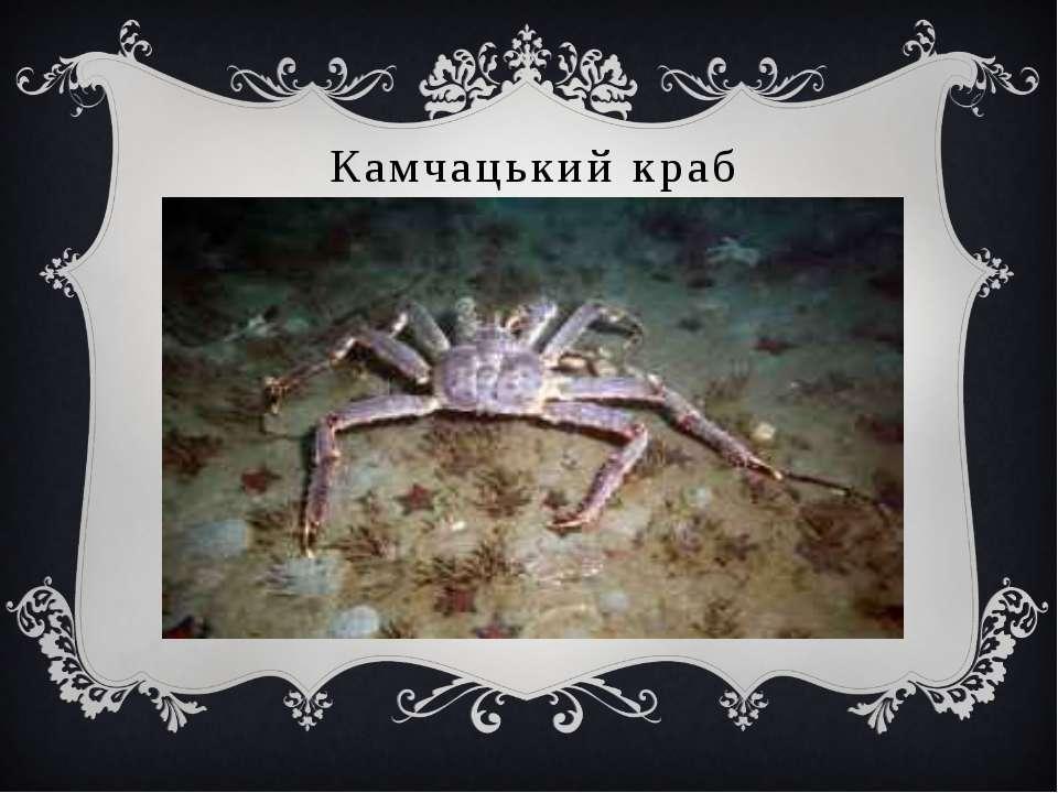 Камчацький краб