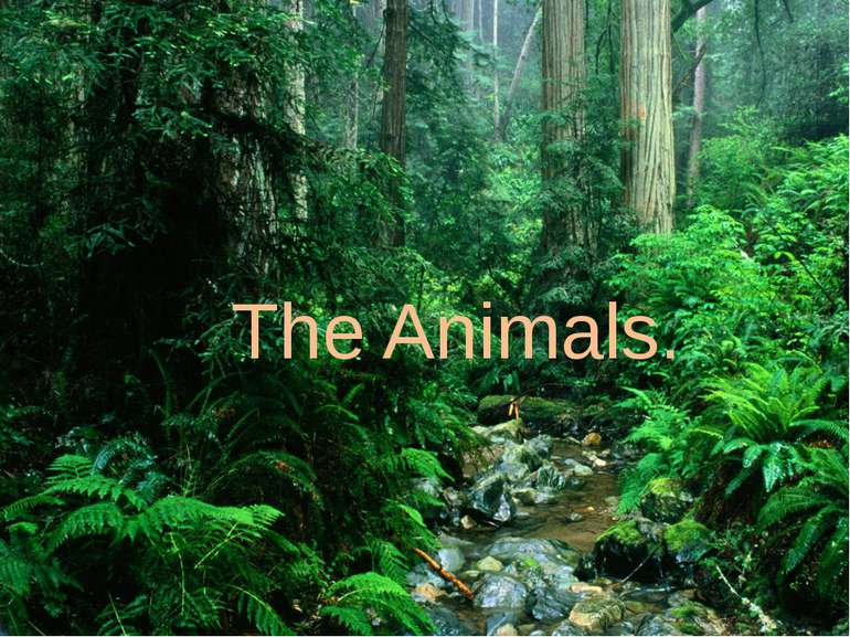 The Animals.