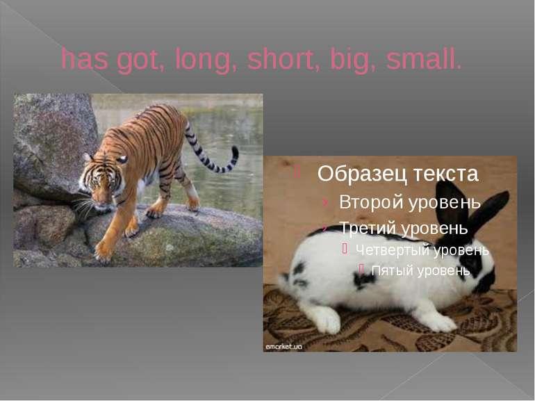 has got, long, short, big, small.