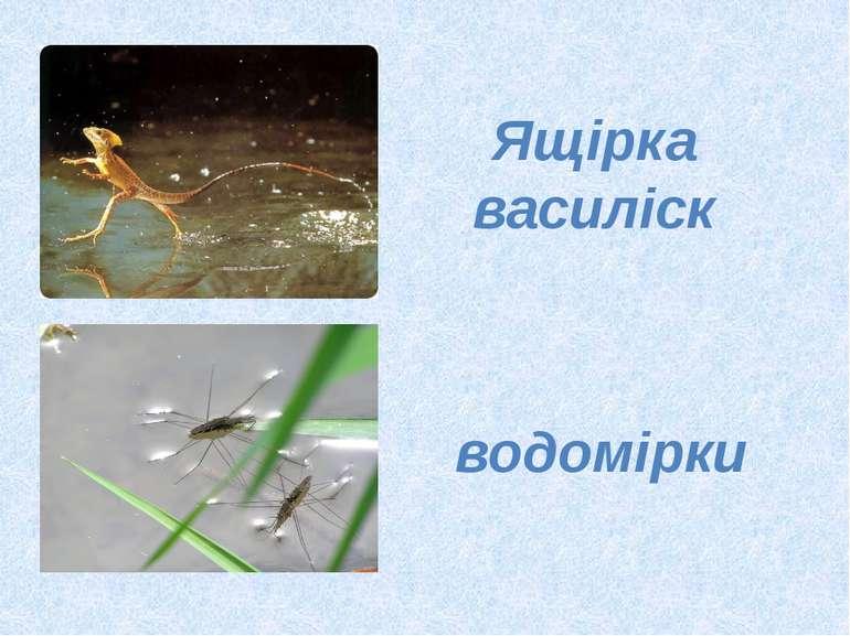 Ящірка василіск водомірки