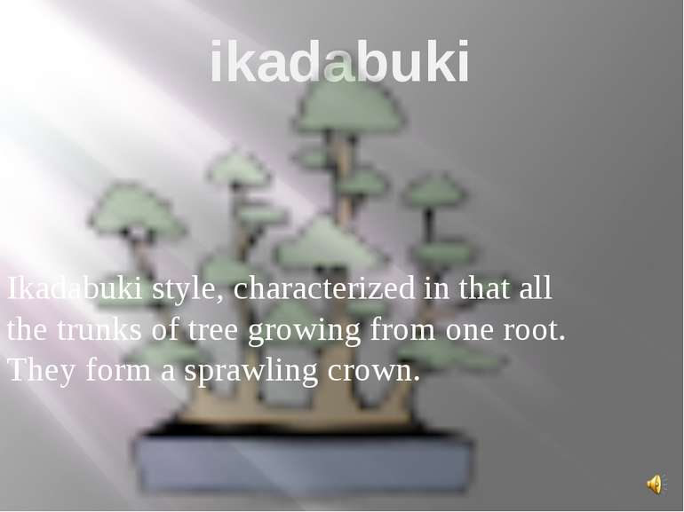 ikadabuki Ikadabuki style, characterized in that all the trunks of tree growi...