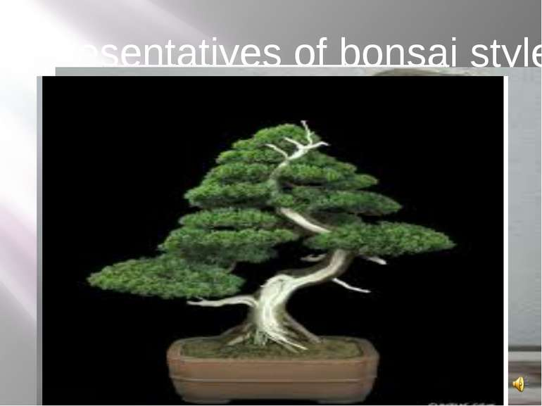 Representatives of bonsai style