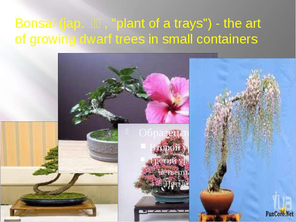 "Bonsai (jap. 盆栽, ""plant of a trays"") - the art of growing dwarf trees in sm..."