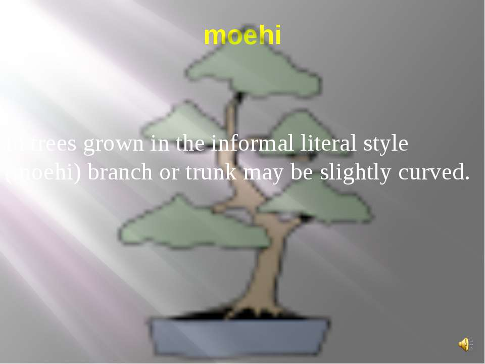moehi In trees grown in the informal literal style (moehi) branch or trunk ma...