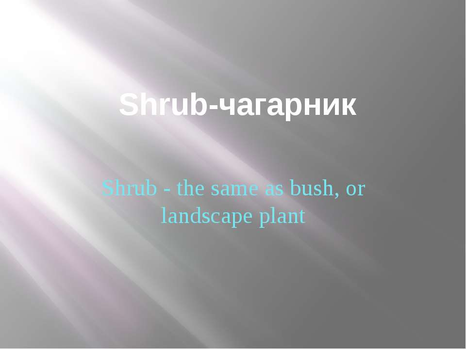 Shrub-чагарник Shrub - the same as bush, or landscape plant