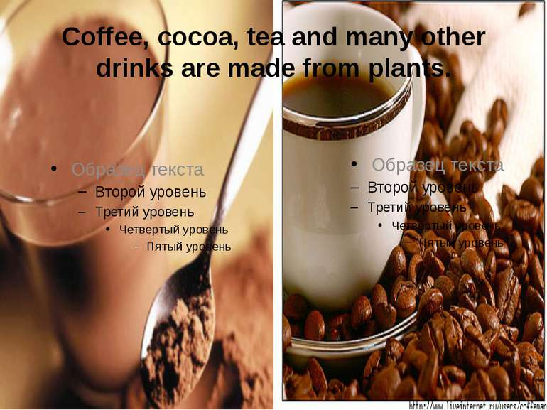 Coffee, cocoa, tea and many other drinks are made from plants.