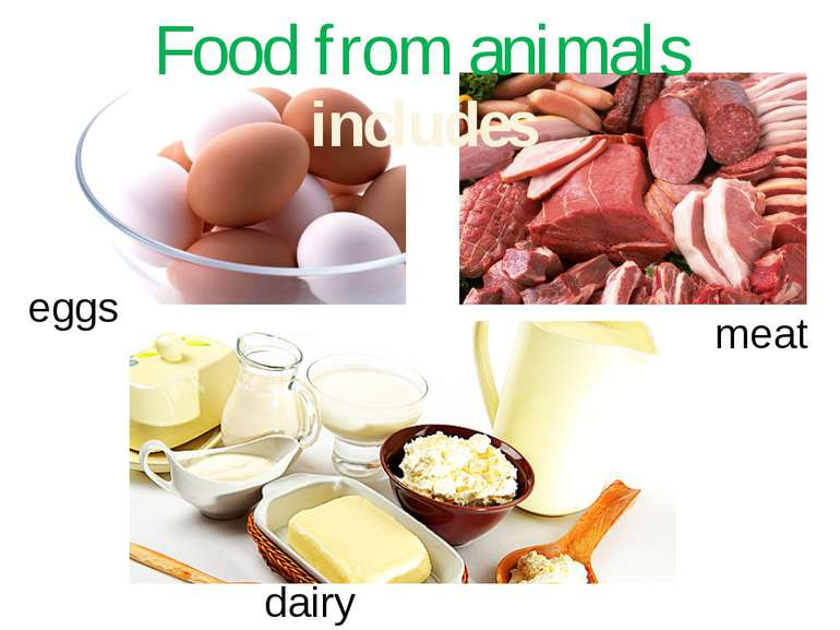 Food from animals eggs meat dairy products includes