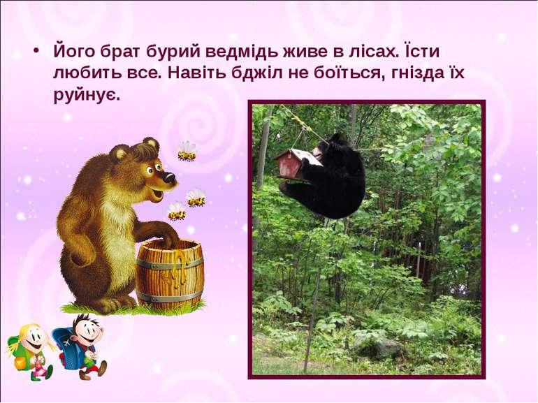 Його брат бурий ведмідь живе в лісах. Їсти любить все. Навіть бджіл не боїтьс...