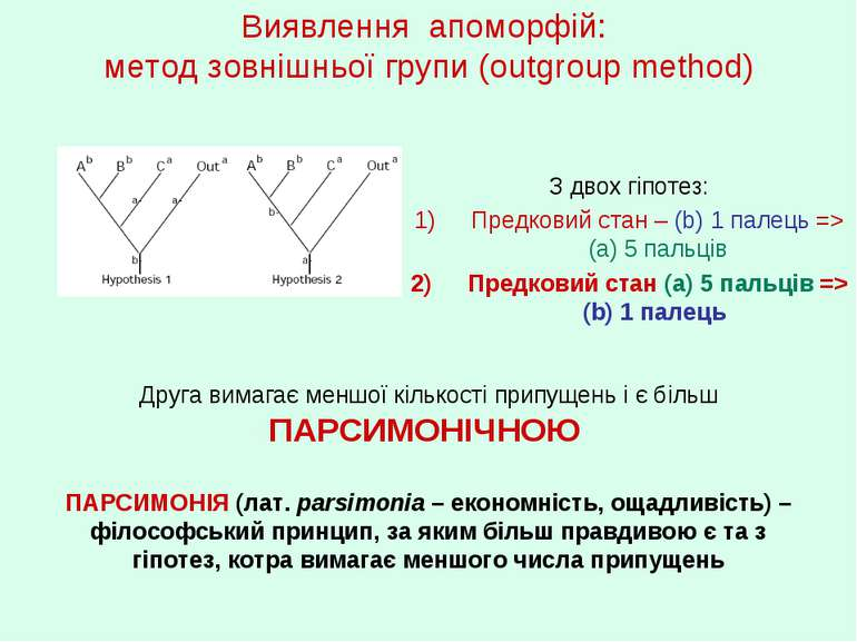 Виявлення апоморфій: метод зовнішньої групи (outgroup method) З двох гіпотез:...
