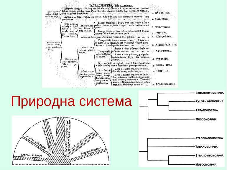 Штучна система Природна система
