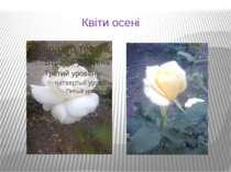 Квіти осені