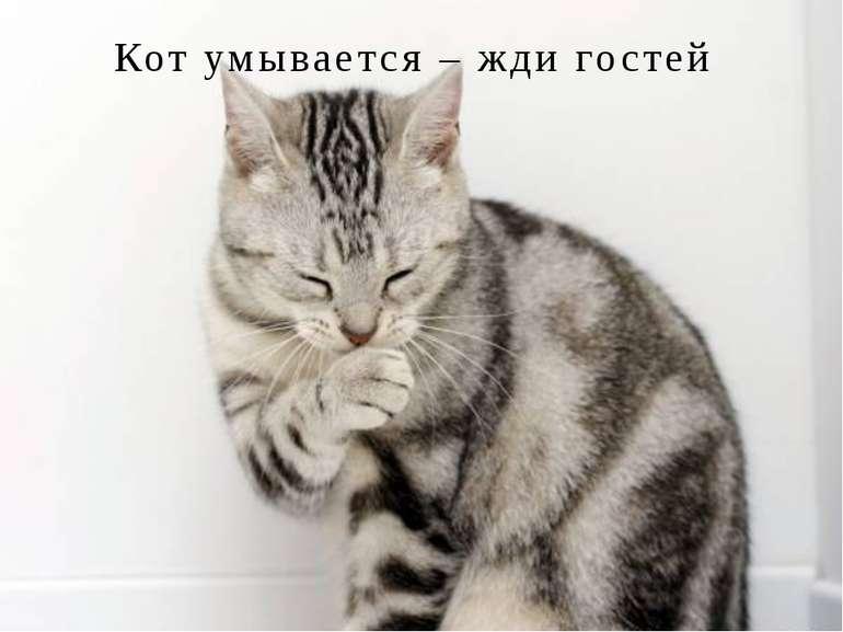 Кот умывается – жди гостей