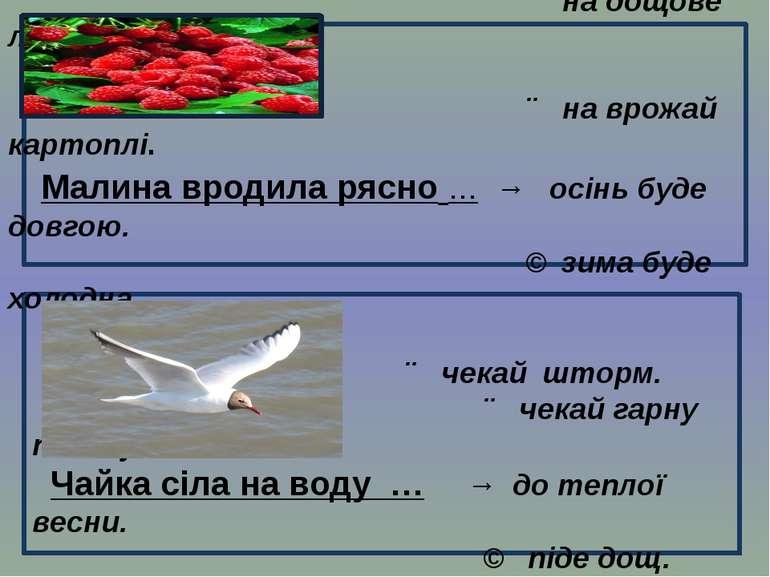 ↗ на дощове літо. ↗ на врожай картоплі. Малина вродила рясно … → осінь буде д...