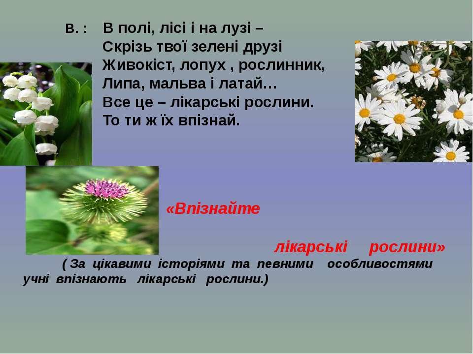 В. : В полі, лісі і на лузі – Скрізь твої зелені друзі Живокіст, лопух , росл...