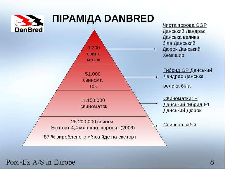 ПІРАМІДА DANBRED 9.200свиноматок 51.000 свиноматок 1.150.000 свиноматок 25.20...