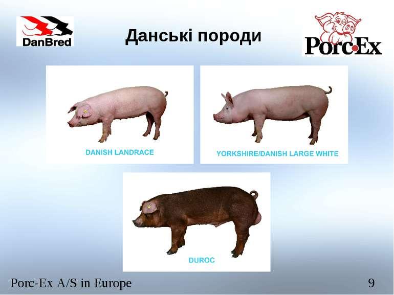 Данські породи Porc-Ex A/S in Europe