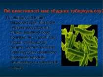 На відміну від інших мікробактерій, бактерія тубуркульозу досить стійка: відм...