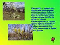 Цвіт верби — прекрасне і зворушливе диво природи. Пухнасті вербові котики — в...