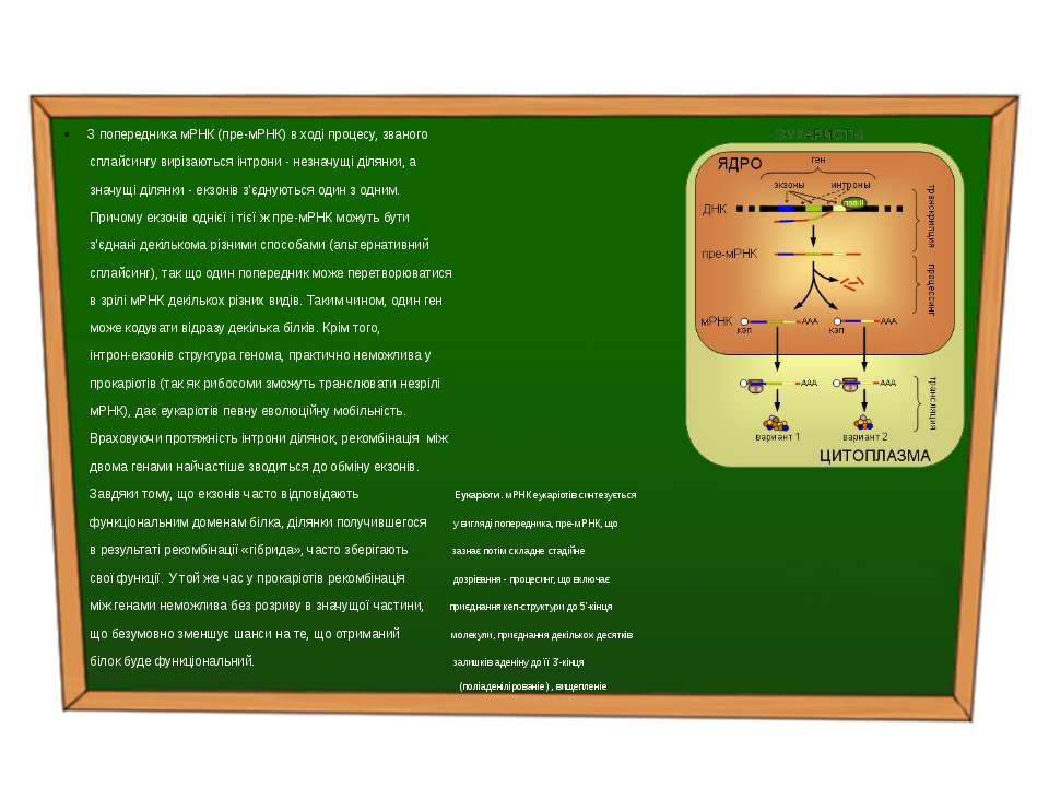 З попередника мРНК (пре-мРНК) в ході процесу, званого сплайсингу вирізаються ...