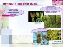 зв'язки в екосистемах просторове розташування рослин конкуренція за світло, в...
