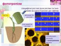 фототропізм специфічні ростові рухи рослин та їхніх органів на односторонню д...