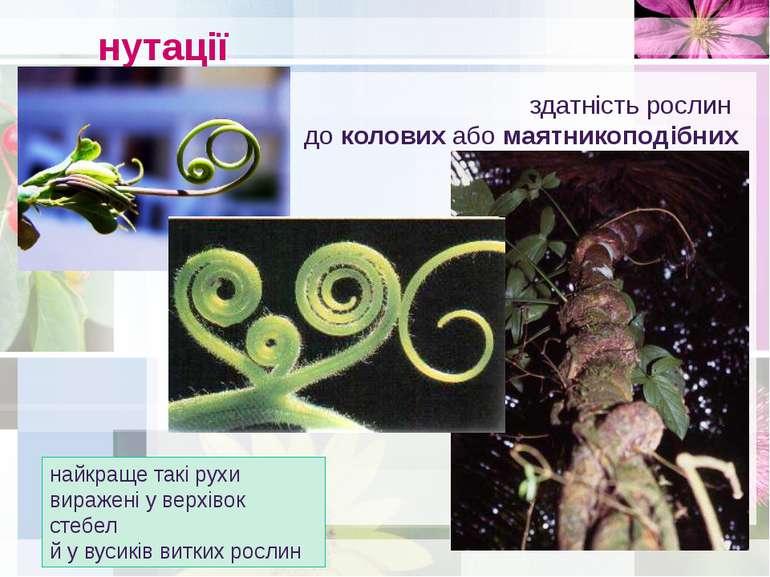 нутації здатність рослин до колових або маятникоподібних рухів найкраще такі ...