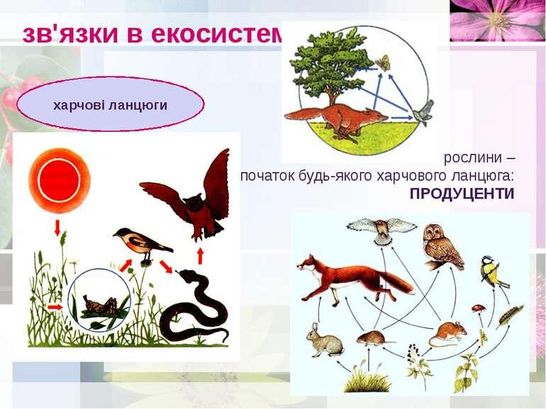 зв'язки в екосистемах харчові ланцюги рослини – початок будь-якого харчового ...