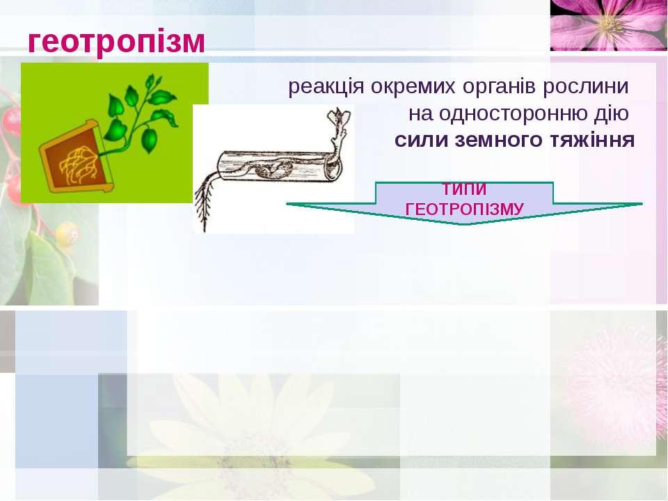 геотропізм реакція окремих органів рослини на односторонню дію сили земного т...