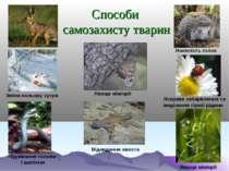 Способи самозахисту тварин