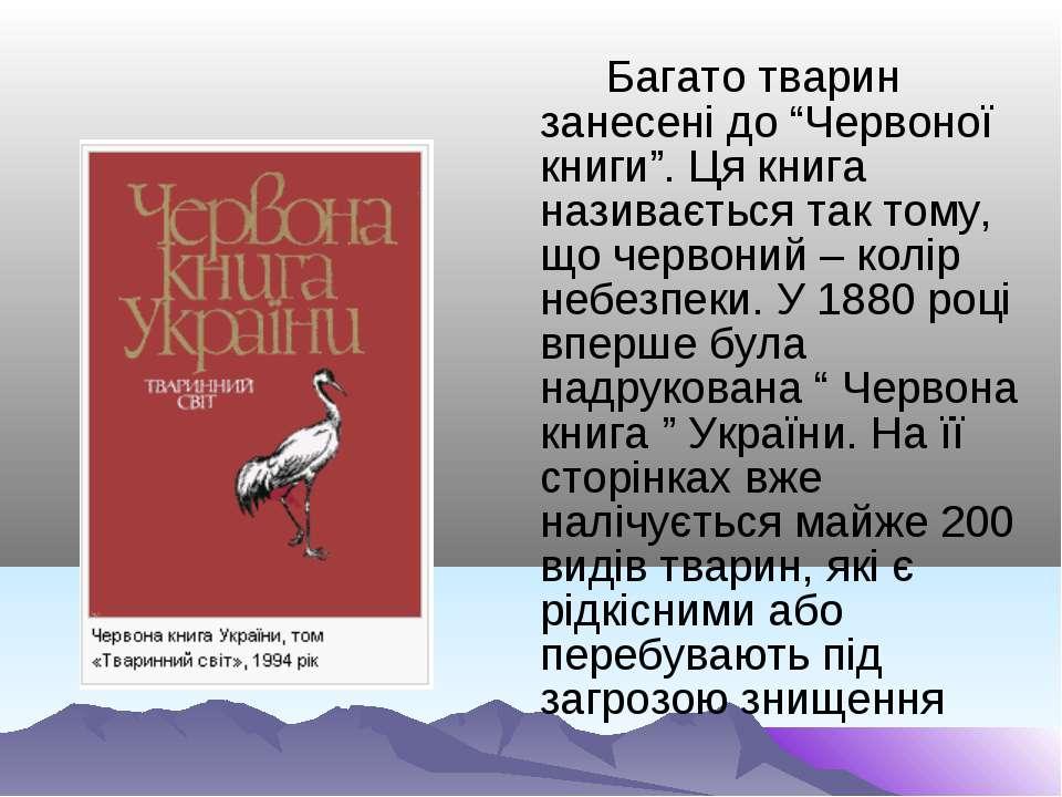 """Багато тварин занесені до """"Червоної книги"""". Ця книга називається так тому, що..."""